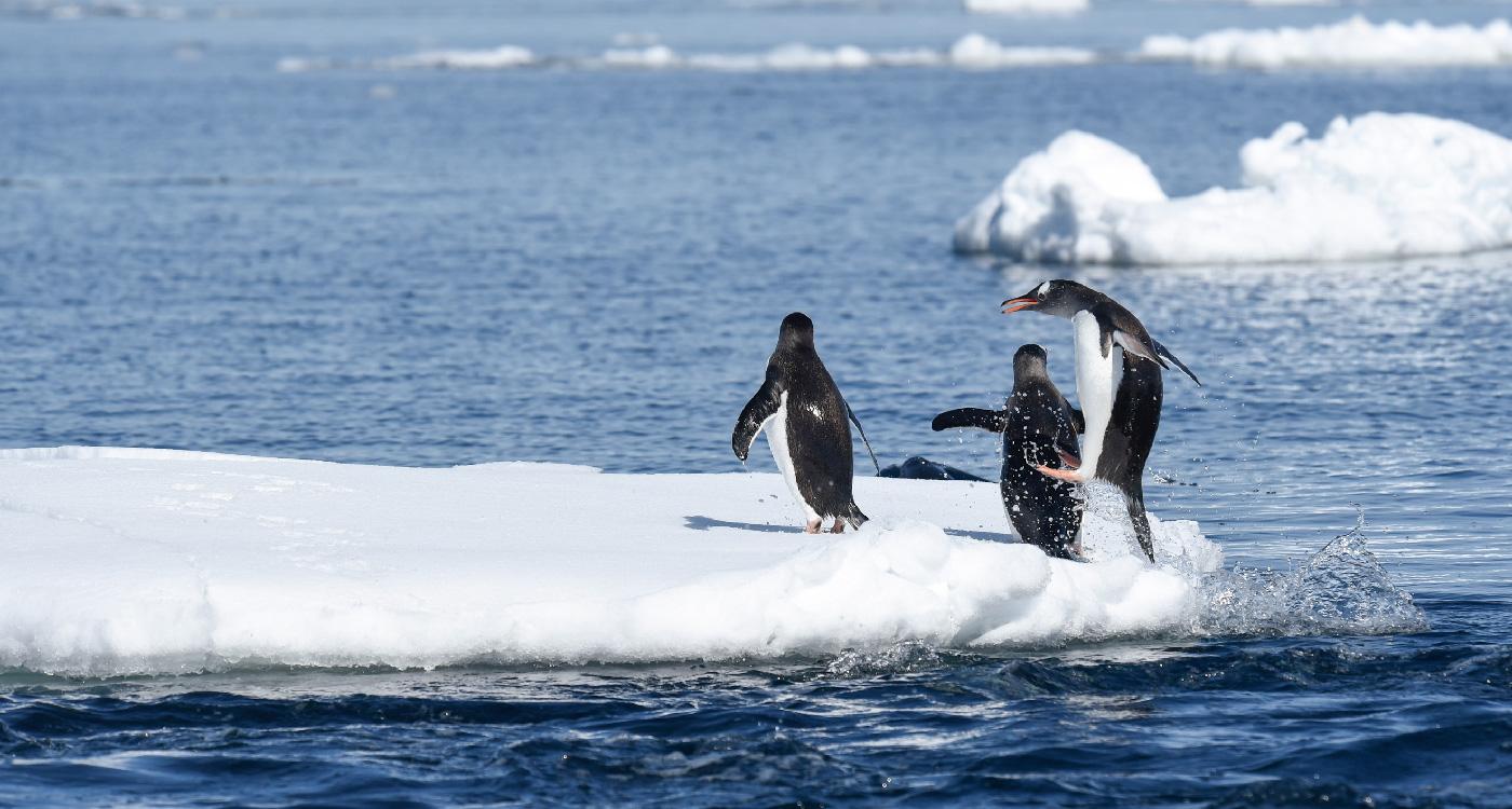 Wildlife-in-Antarctica5